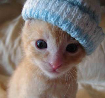 picture of cat with hat