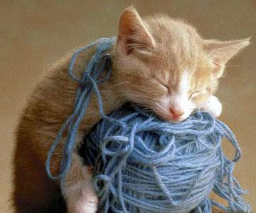 picture of cat asleep on yarn