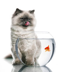 picture of cat standing over fish bowl